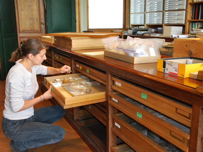 05 Curator Annelise Folie managing the fossil mammal collections from the early Eocene of Erquelinnes, Belgium