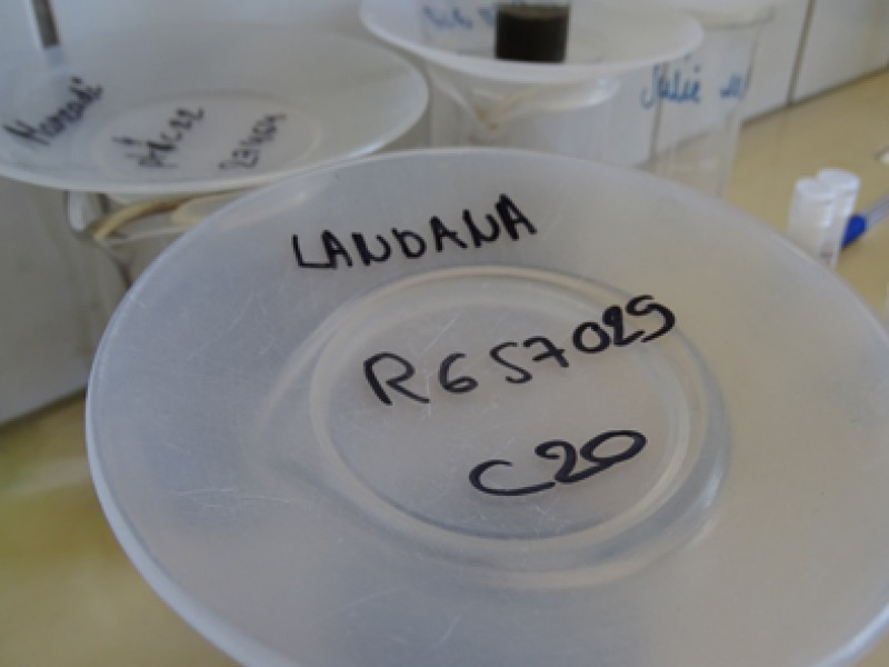 04 Palynological residue of the samples from the Landana, Bololo and Manzadi sections
