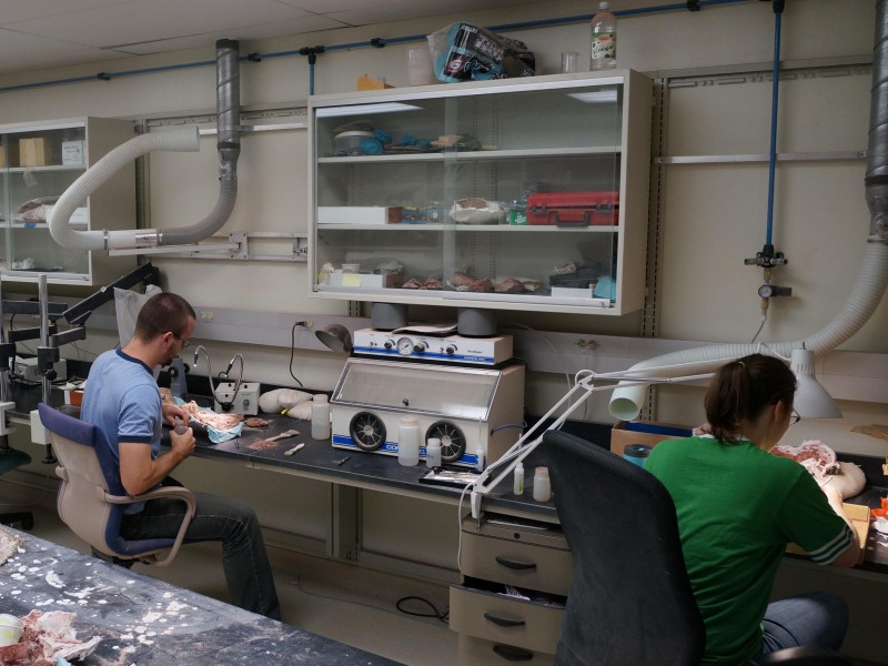 01 Fossil preparation laboratory