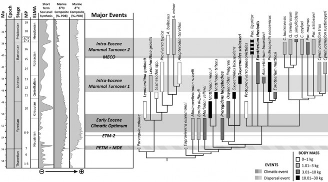 Phylogeny of the Proviverrinae calibrated with stratigraphy and with eustatic and climatic variations
