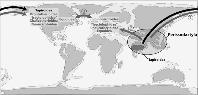 Schematic map showing the geographic dispersal of the early perissodactyls. 1: dispersal via the Bering land bridge; 2: dispersal via land connections across the Turgai Strait and/or along the Tethysian shore; 3: dispersal via the Greenland land bridge