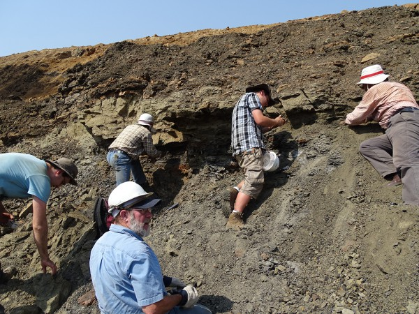 12 Discovery of a new fossiliferous layer with vertebrates two days before the end of the expedition. All the team is requested to excavate it