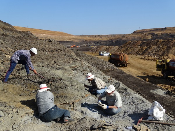 04 The paleontologists are cleaning the outcrop