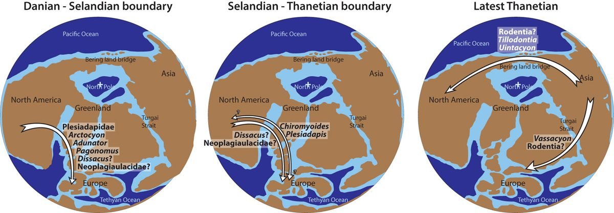 Hypothetical mammal dispersals involving Europe during the Palaeocene. The main dispersal episode likely happened at or around the Danian-Selandian boundary, more or less corresponding to the Torrejonian-Tiffanian boundary. Possible dispersals, involving mainly Plesiadapidae, could have occurred around the Selandian-Thanetian boundary.