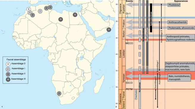 (1) Geographic distribution of the faunal assemblages. (2) Stratigraphic distribution of Tinerhodon and hyaenodont subfamilies in Africa during Paleocene and Eocene, and of the faunal assemblages regarding the main climatic events and mammal appearances.