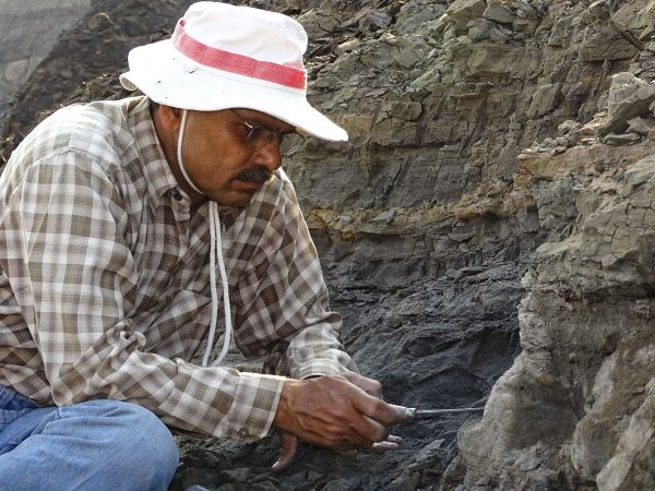 03 Kishor Kumar digs a small continental lens that yield terrestrial mammals