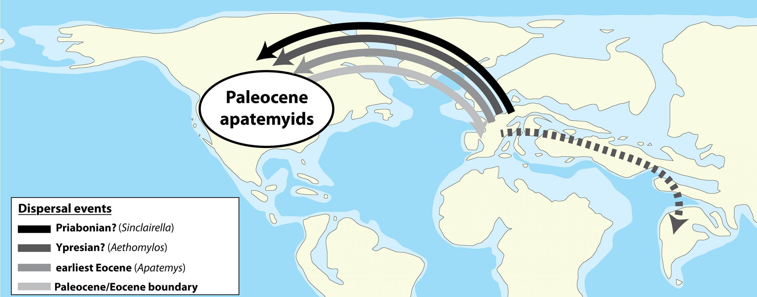 Schematic map showing the hypothetical geographic dispersion of apatemyids. Apatemyidae dispersed between North America and Europe via the Greenland Bridge and Thulean route; they dispersed from Europe to India probably through the Turgai Strait and/or along the Tethyan shore. Oldest apatemyids are recorded in the Paleocene of North America (Torrejonian) (Simpson 1940; McKenna 1963a; Szalay 1968; West 1973b). See text for explanations of the dispersal events. The exact timing of the dispersals of Apatemyidae in India is unknown but probably occurred in the Ypresian. Paleogeographic map adapted from Ron Blakey, Eocene (http://www2.nau.edu/rcb7/050Marect.jpg)