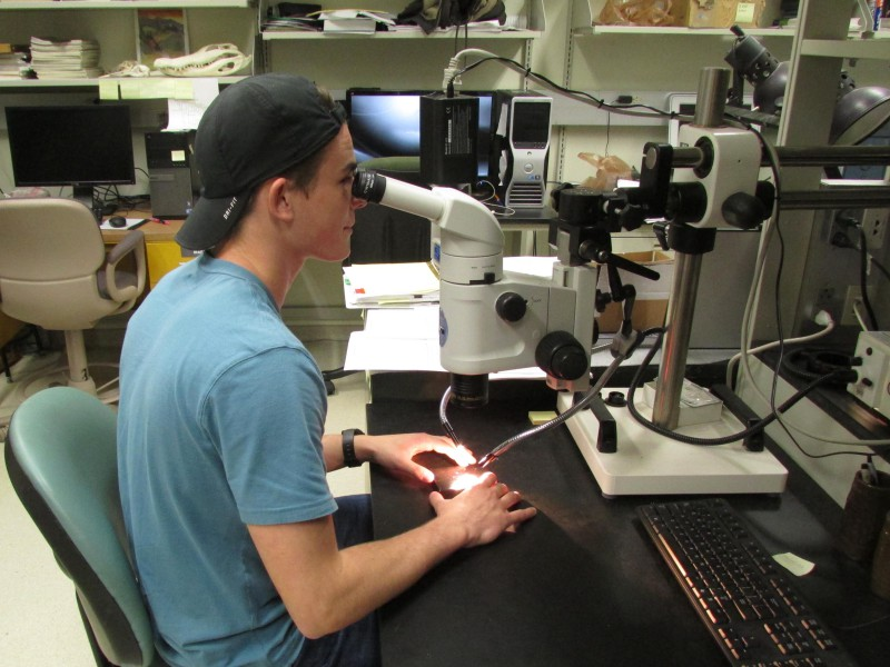 05 Undergraduate researcher Will Stevens at digital microscopy