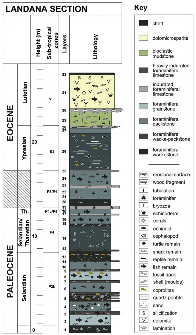 Stratigraphic log of the Landana section with ages estimated based on the identified sub-tropical zones of planktonic foraminiferans